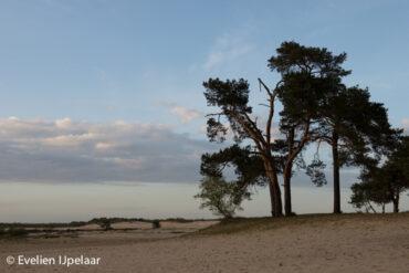Fotoshoot in de Loonse en Drunense duinen